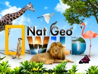 Nat Geo Wild wallpaper tutorial