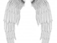 Angel Wings Free PSD