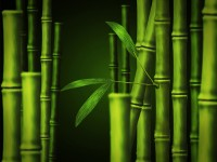 Free Bamboo PSD Template